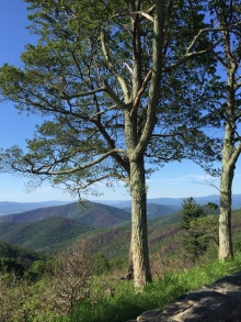 Overlook along Skyline Drive